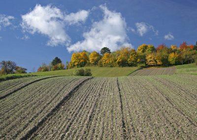 Felder bei Flatz