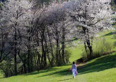 Frühlingsportal