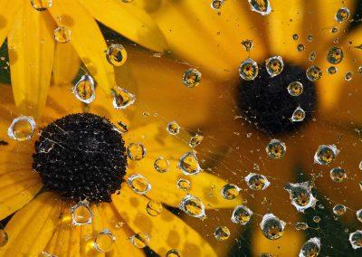 Tropfenblumen
