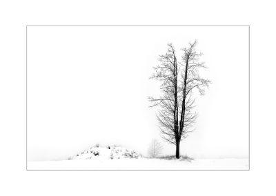 WHM_Einsamer Baum