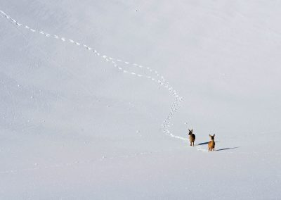 Zwei Rehe im Schnee